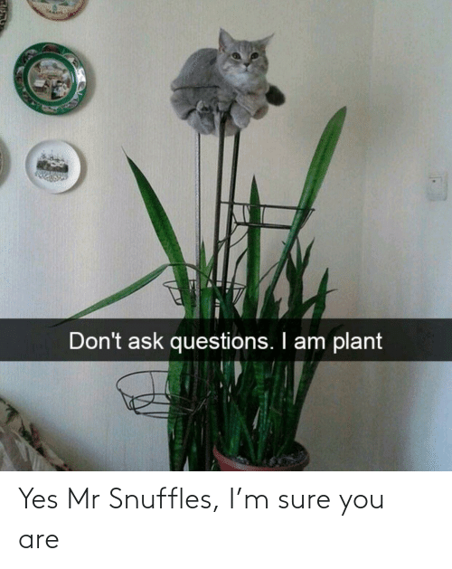 Mr: Yes Mr Snuffles, I'm sure you are
