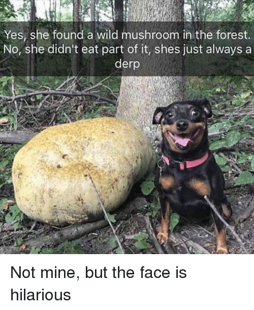 Wild, Hilarious, and The Forest: Yes, she found a wild mushroom in the forest  No, she didn't eat part of it, shes just always a  derp Not mine, but the face is hilarious