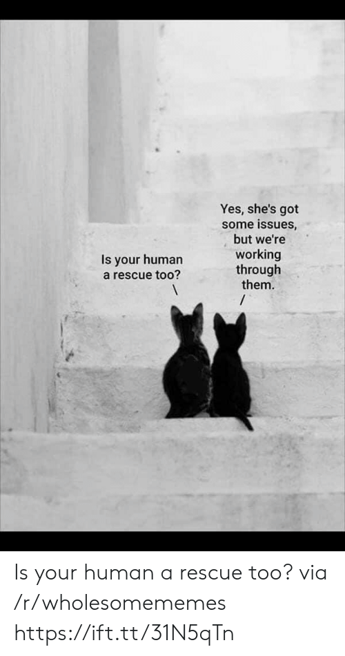 Got, Yes, and Human: Yes, she's got  some issues,  but we're  working  through  them.  /  Is your human  a rescue too? Is your human a rescue too? via /r/wholesomememes https://ift.tt/31N5qTn