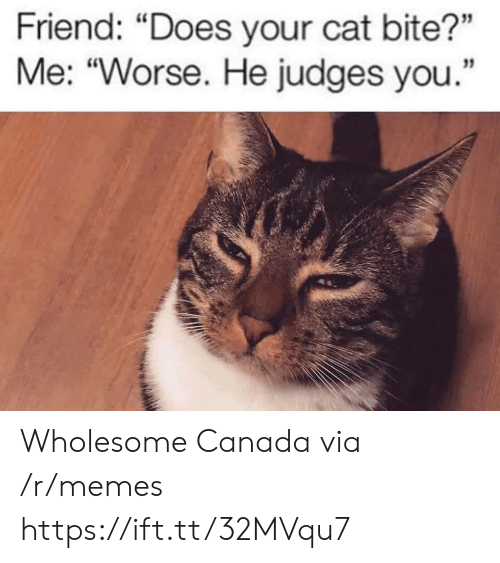 Memes, Canada, and The View: YES  TRESPASSING  THIS IS A PRIVATE DOCK, BUT  YOU ARE WELCOME TO SIT HERE  AND ENJOY THE VIEW  CANADA100 Wholesome Canada via /r/memes https://ift.tt/32MVqu7