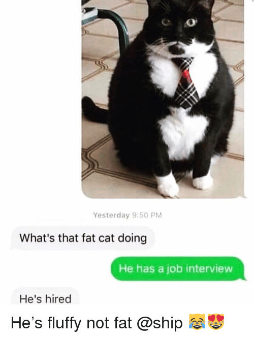 Not Fat: Yesterday 9:50 PM  What's that fat cat doing  He has a job interview  He's hired He's fluffy not fat @ship 😹😻