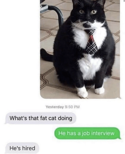 Job Interview, Fat, and Cat: Yesterday 9:50 PM  What's that fat cat doing  He has a job interview  He's hired