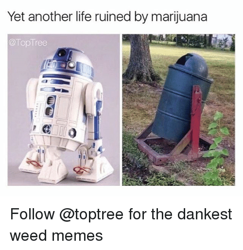 Weed Memes: Yet another life ruined by marijuana  Top Tree Follow @toptree for the dankest weed memes