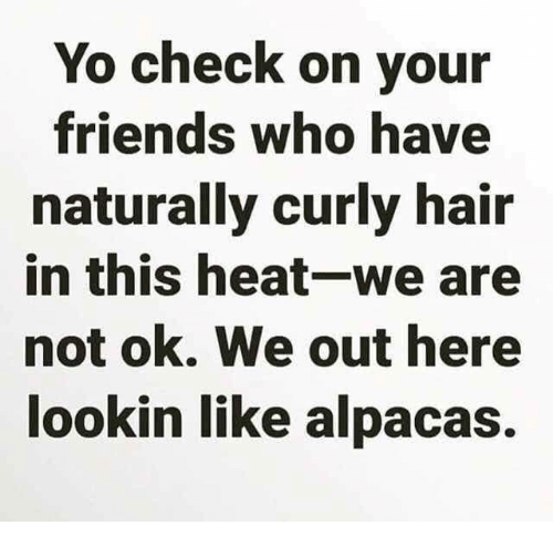 Friends, Memes, and Yo: Yo check on your  friends who have  naturally curly hair  in this heat-we are  not ok. We out here  ookin like alpacas.