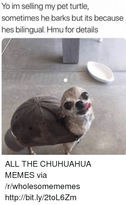 Memes, Yo, and Http: Yo im selling my pet turtle,  sometimes he barks but its because  hes bilingual. Hmu for details ALL THE CHUHUAHUA MEMES via /r/wholesomememes http://bit.ly/2toL6Zm