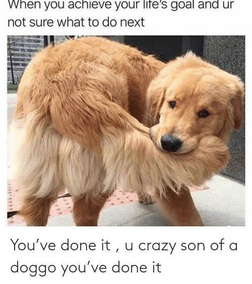 Crazy Son: You've done it , u crazy son of a doggo you've done it