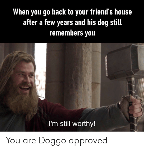 Approved: You are Doggo approved