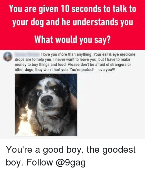 9gag, Dogs, and Food: You are given 10 seconds to talk to  your dog and he understands you  What would you say?  I love you more than anything. Your ear & eye medicine  drops are to help you. I never want to leave you, but I have to make  money to buy things and food. Please don't be afraid of strangers or  other dogs, they won't hurt you. You're perfect! I love you!!! You're a good boy, the goodest boy. Follow @9gag