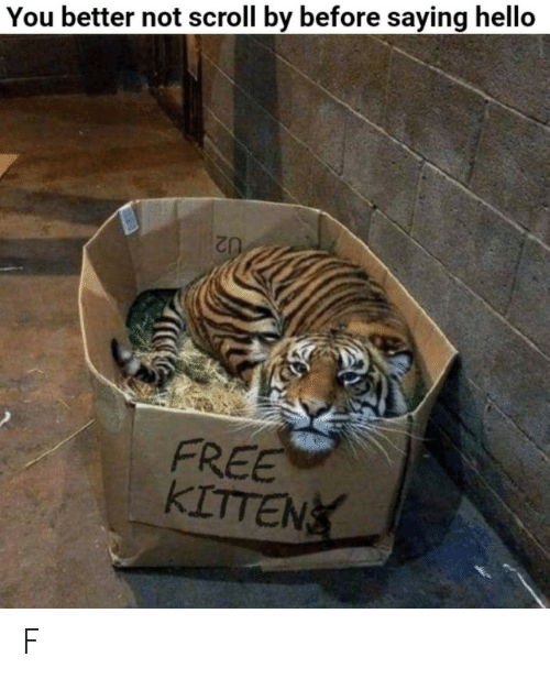 Hello, Free, and Kitten: You better not scroll by before saying hello  FREE  KITTEN F