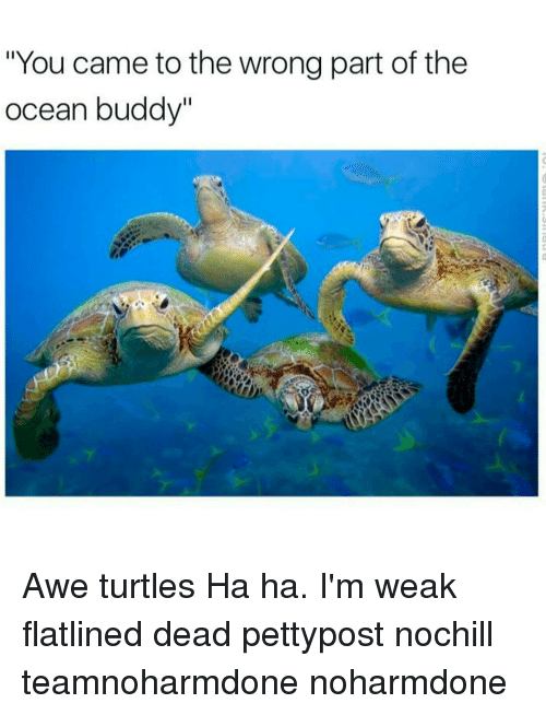 """Turtling: """"You came to the wrong part of the  ocean buddy"""" Awe turtles Ha ha. I'm weak flatlined dead pettypost nochill teamnoharmdone noharmdone"""