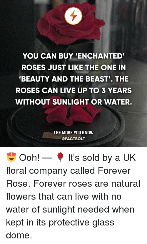 Oohing: YOU CAN BUY ENCHANTED'  ROSES JUST LIKE THE ONE IN  BEAUTY AND THE BEAST THE  ROSES CAN LIVE UP TO 3 YEARS  WITHOUT SUNLIGHT OR WATER.  THE MORE YOU KNOW  @FACTBOLT 😍 Ooh! — 🌹 It's sold by a UK floral company called Forever Rose. Forever roses are natural flowers that can live with no water of sunlight needed when kept in its protective glass dome.