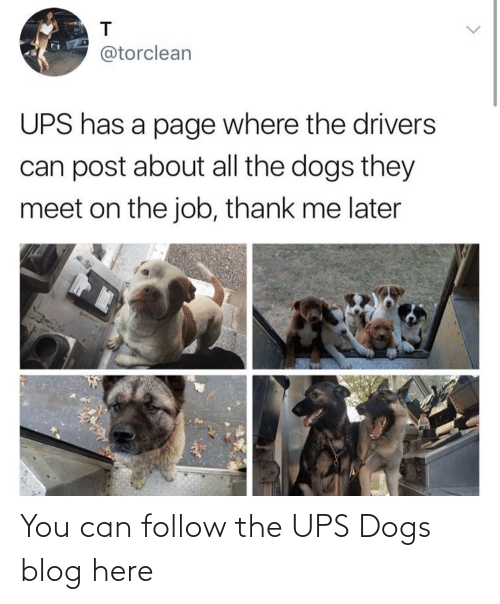 A: You can follow the UPS Dogs blog here