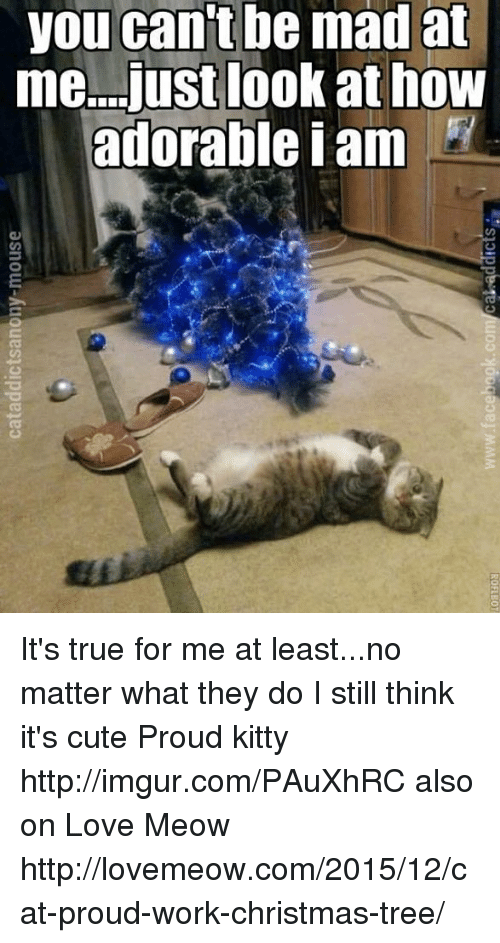 Kitties, Memes, and Christmas Tree: you cant be mad at  me...just look at how  adorable I am  O  'so-  ao  dh  aa  ki  eoe  Do I  nsr  a o  u a  oe  asnour-Auquespippeea It's true for me at least...no matter what they do I still think it's cute  Proud kitty http://imgur.com/PAuXhRC also on Love Meow http://lovemeow.com/2015/12/cat-proud-work-christmas-tree/