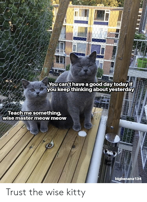 Reddit, Good, and Today: You can't have a good day today if  youkeepthinking about yesterday  Teachme something,  wise master meow meow  bigbanana134 Trust the wise kitty