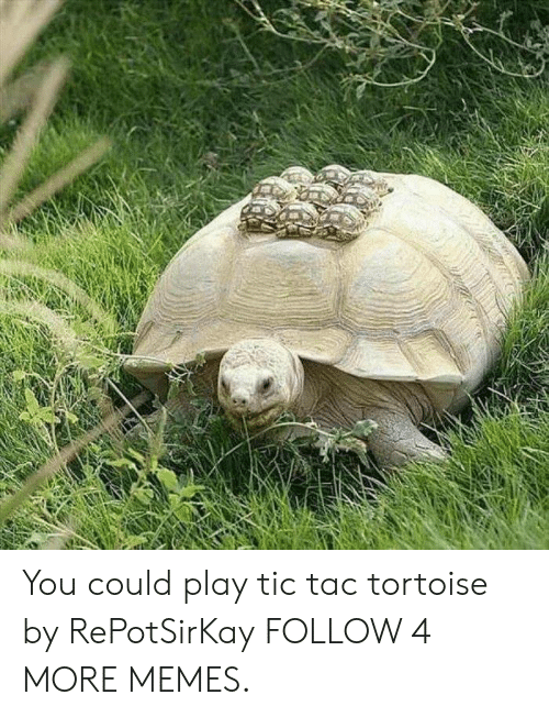 Could Play: You could play tic tac tortoise by RePotSirKay FOLLOW 4 MORE MEMES.