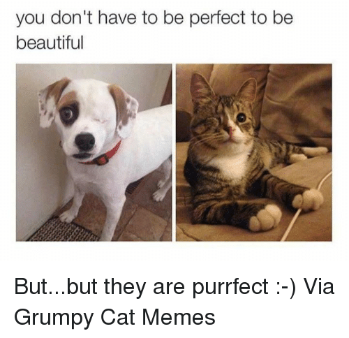 Beautiful, Cats, and Meme: you don't have to be perfect to be  beautiful But...but they are purrfect :-) Via Grumpy Cat Memes