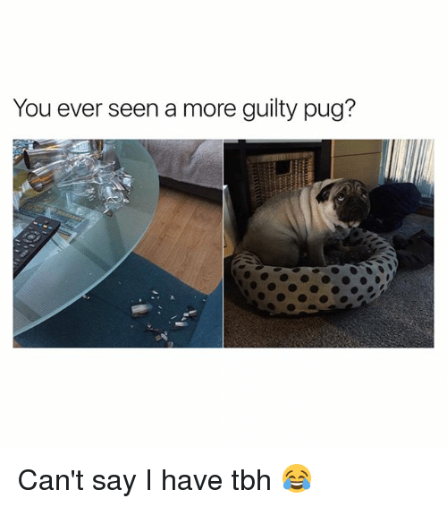 Pugly: You ever seen a more guilty pug? Can't say I have tbh 😂