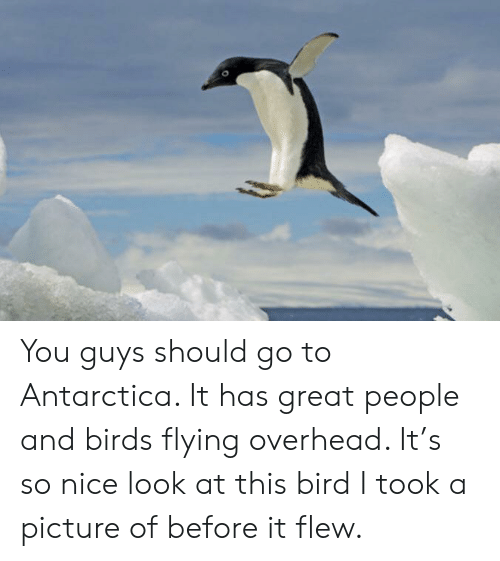 birds flying: You guys should go to Antarctica. It has great people and birds flying overhead. It's so nice look at this bird I took a picture of before it flew.