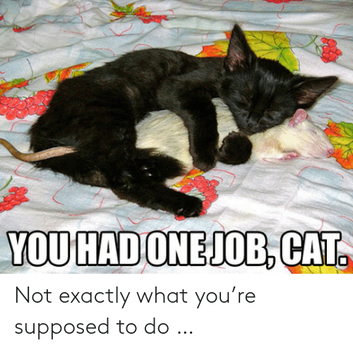 Exactly What: YOU HAD ONEJOB, CAT. Not exactly what you're supposed to do …