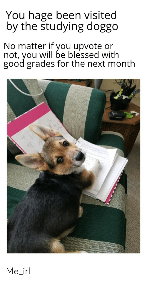 Blessed, Good, and Irl: You hage been visited  by the studying doggo  No matter if you upvote or  not, you will be blessed with  good grades for the next month Me_irl