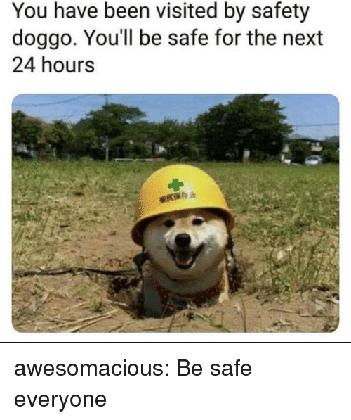 Tumblr, Blog, and Http: You have been visited by safety  doggo, You'll be safe for the next  24 hours awesomacious:  Be safe everyone