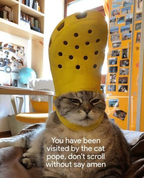 Pope Francis, Been, and Cat: You have been  visited by the cat  pope, don't scroll  without say amen