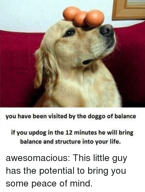 peace of mind: you have been visited by the doggo of balance  if you updog in the 12 minutes he will bring  balance and structure into your life. awesomacious:  This little guy has the potential to bring you some peace of mind.