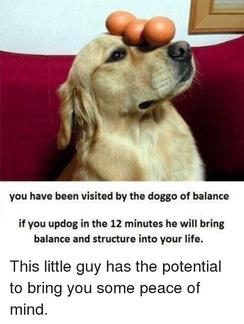 peace of mind: you have been visited by the doggo of balance  if you updog in the 12 minutes he will bring  balance and structure into your life. This little guy has the potential to bring you some peace of mind.