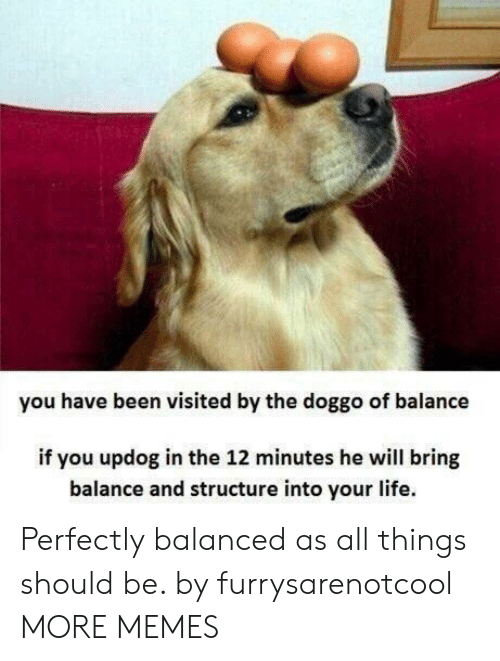 Dank, Life, and Memes: you have been visited by the doggo of balance  if you updog in the 12 minutes he will bring  balance and structure into your life. Perfectly balanced as all things should be. by furrysarenotcool MORE MEMES