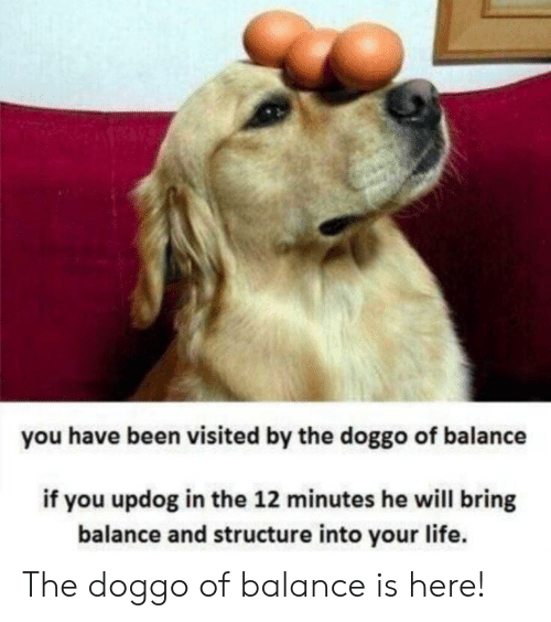 Life, Been, and Doggo: you have been visited by the doggo of balance  if you updog in the 12 minutes he will bring  balance and structure into your life. The doggo of balance is here!