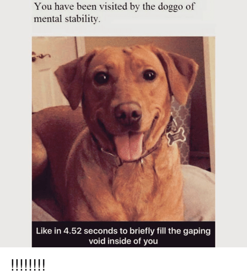 Dank, Been, and 🤖: You have been visited by the doggo of  mental stability.  Like in 4.52 seconds to briefly fill the gaping  void inside of you !!!!!!!!