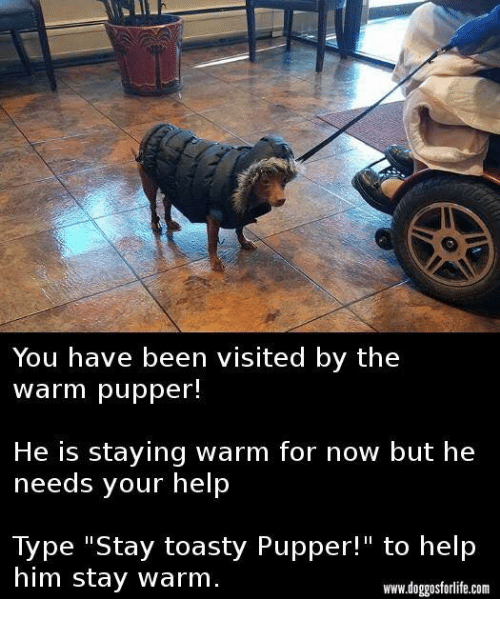 """Toastie: You have been visited by the  warm pupper!  He is staying warm for now but he  needs your help  Type """"Stay toasty Pupper!"""" to help  him stay warm.  www.doggosforlife.com"""