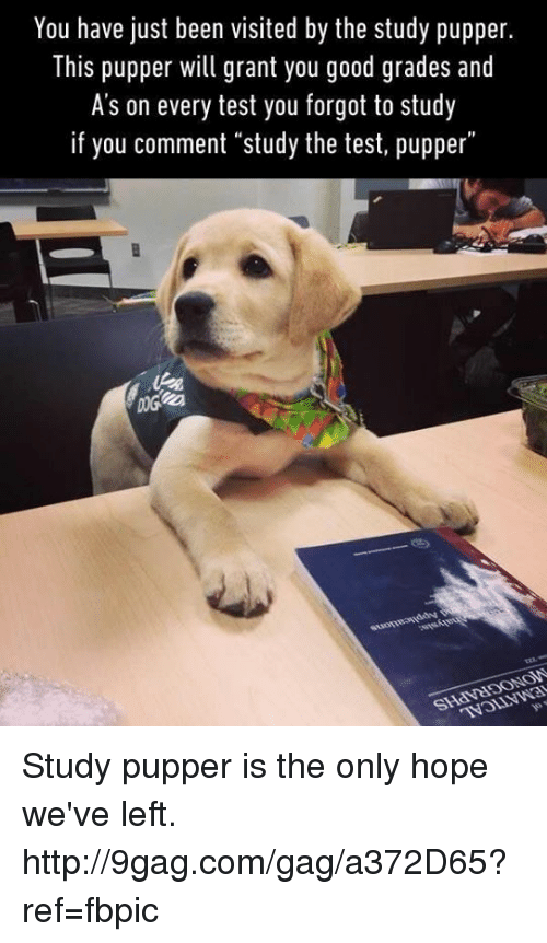"Good Grade: You have just been visited by the study pupper.  This pupper will grant you good grades and  A's on every test you forgot to study  if you comment ""study the test, pupper"" Study pupper is the only hope we've left. http://9gag.com/gag/a372D65?ref=fbpic"