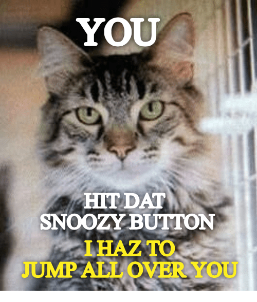 Jump All Over: YOU  HIT DAT  SNOOZYBUTTON  IHAZTO  JUMP ALL OVER YOU