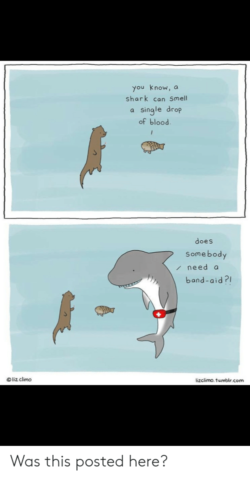 Aid: you know, a  shark can Smell  single drop  of blood.  /  does  Somebody  need a  band-aid?  Oliz climo  lizclimo. tumblr.com Was this posted here?