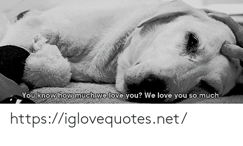 love you so much: You know how much we love you? We love you so much. https://iglovequotes.net/