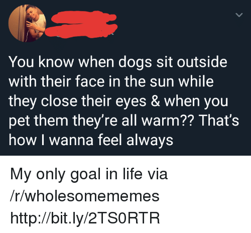 Dogs, Life, and Goal: You know when dogs sit outside  with their face in the sun while  they close their eyes & when you  pet them they're all warm?? That's  how I wanna feel always My only goal in life via /r/wholesomememes http://bit.ly/2TS0RTR