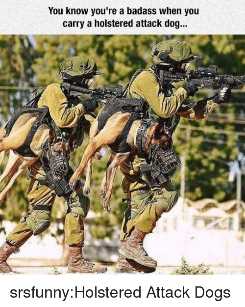 A Badass: You know you're a badass when you  carry a holstered attack dog... srsfunny:Holstered Attack Dogs