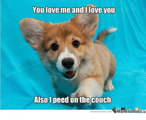 Meme Center Com: You love me and I love you  Also I peed on the couch  meme Center.com
