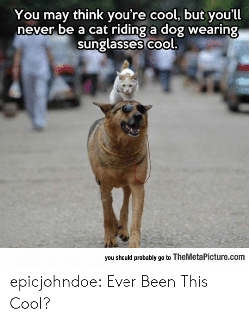 wearing sunglasses: You may think you're cool, but you'll  never be a cat riding a dog wearing  sunglasses co  ol.  you should probably go to TheMetaPicture.com epicjohndoe:  Ever Been This Cool?