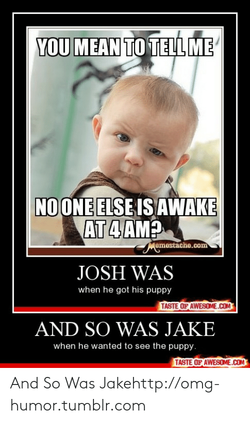 Me No One: YOU MEAN TO TELL ME  NO ONE ELSE IS AWAKE  AT 4 AM?  Memestache.com  JOSH WAS  when he got his puppy  TASTE OF AWESOME.COM  AND SO WAS JAKE  when he wanted to see the puppy.  TASTE OF AWESOME.COM And So Was Jakehttp://omg-humor.tumblr.com