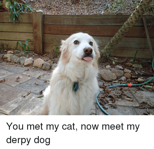 Dog, Cat, and You: You met my cat, now meet my derpy dog