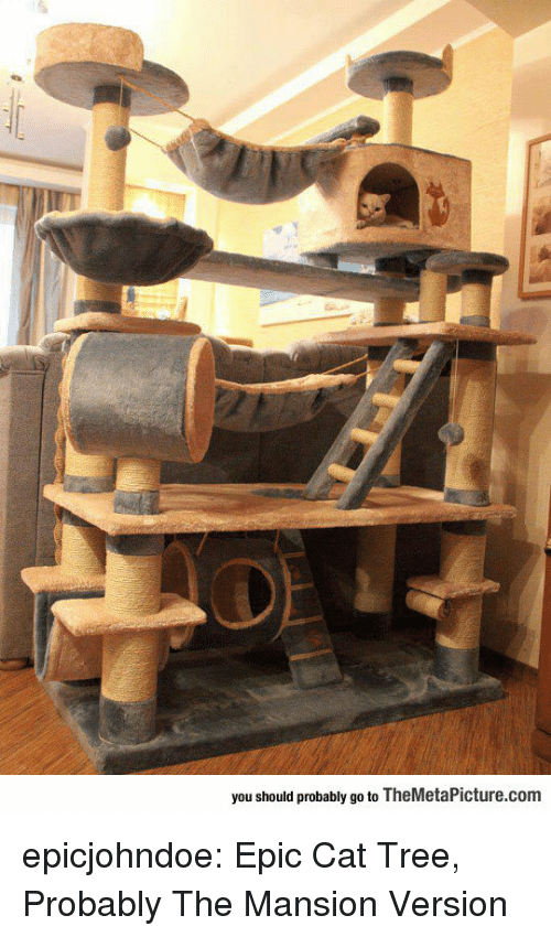 Tumblr, Blog, and Tree: you should probably go to TheMetaPicture.com epicjohndoe:  Epic Cat Tree, Probably The Mansion Version