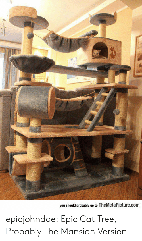 Mansion: you should probably go to TheMetaPicture.com epicjohndoe:  Epic Cat Tree, Probably The Mansion Version