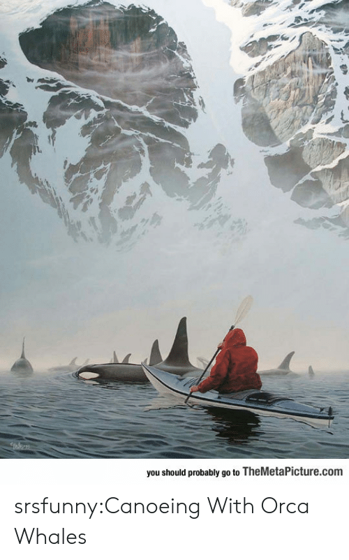 orca: you should probably go to TheMetaPicture.com srsfunny:Canoeing With Orca Whales