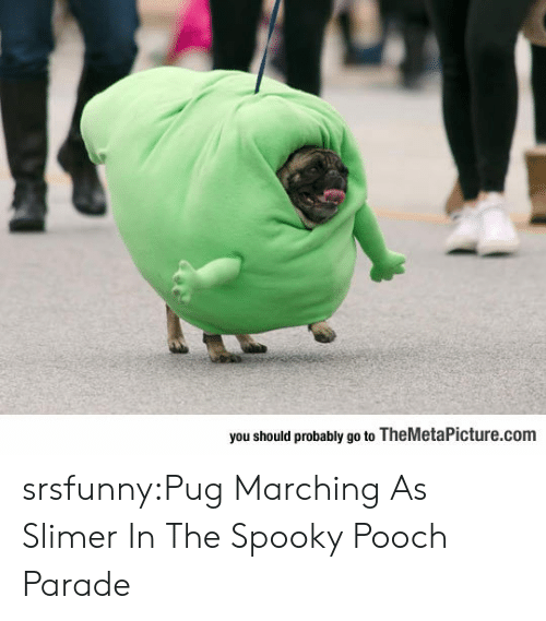 pooch: you should probably go to TheMetaPicture.com srsfunny:Pug Marching As Slimer In The Spooky Pooch Parade