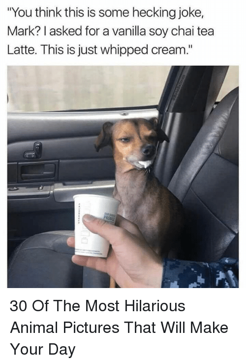 "Animal, Pictures, and Hilarious: ""You think this is some hecking joke,  Mark? I asked for a vanilla soy chai tea  Latte. This is just whipped cream."" 30 Of The Most Hilarious Animal Pictures That Will Make Your Day"