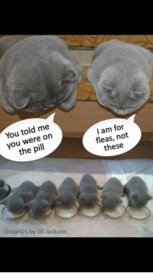 Jill: You told me  you were on  the pill  I am for  fleas, not  these  Graphics by Jill Jackson