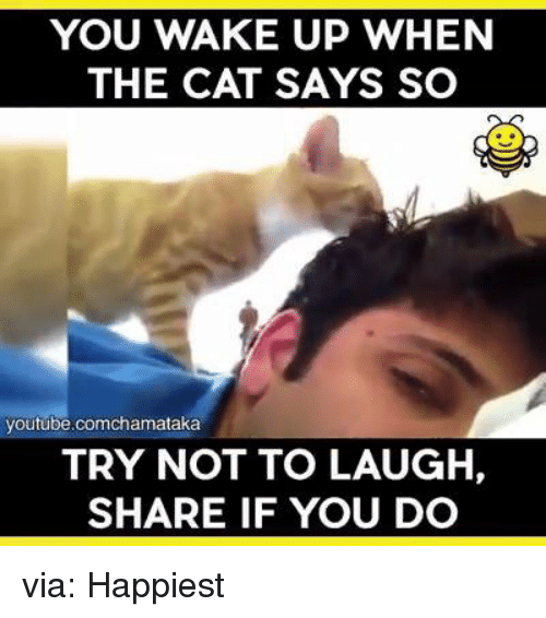 try not to laugh: YOU WAKE UP WHEN  THE CAT SAYS SO  youtube.comchamataka  TRY NOT TO LAUGH,  SHARE IF YOU DO via: Happiest