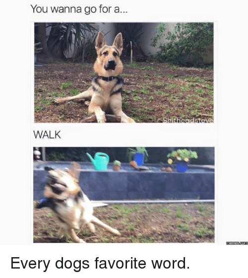 Wanna Go For A Walk: You wanna go for a.  WALK  memes.com Every dogs favorite word.